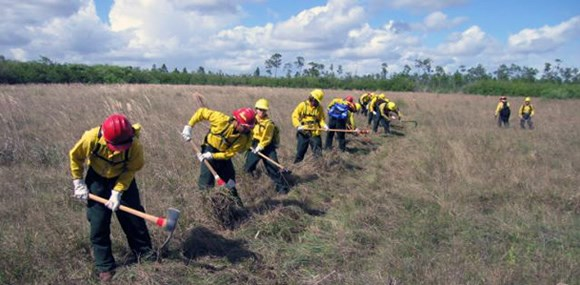 A crew of firefighters uses hand tools to dig fireline in a meadow.