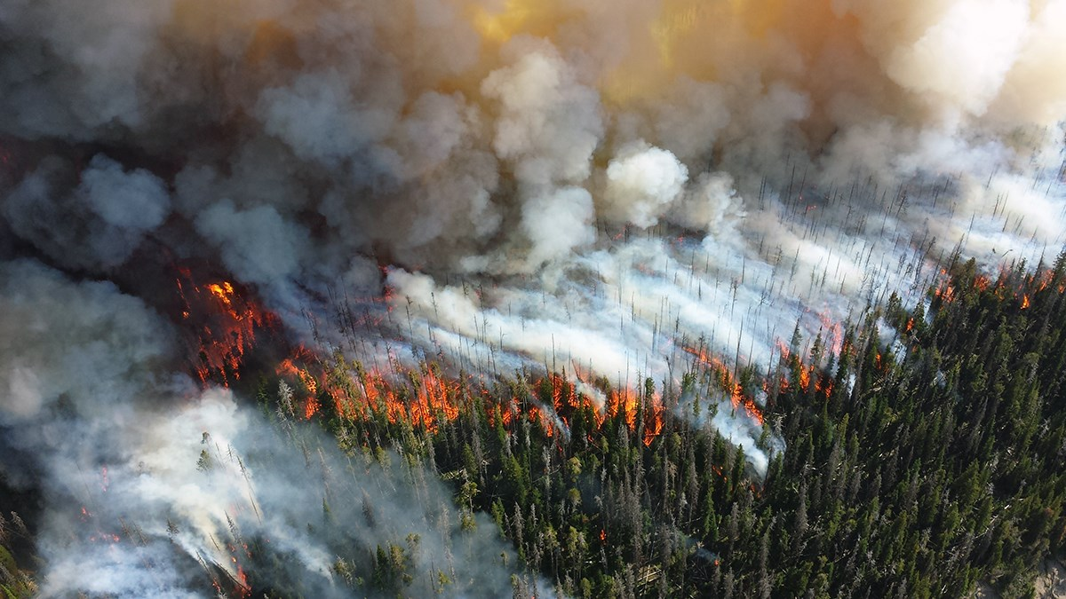 Aerial view of crown fire in forest at Yellowstone