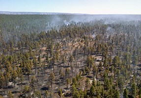 Aerial view of smoke rising from open canopy forest.