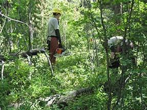 Two crew members work in an area of dense vegetation.