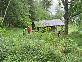 Thick vegetation surrounds a cabin.