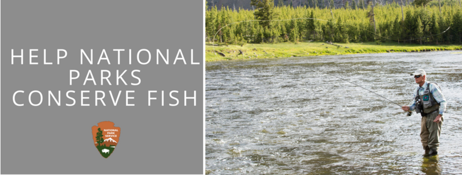 "title overlay ""help national parks conserve fish""  angler casting into river."