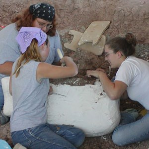 paleontologists working on fossil