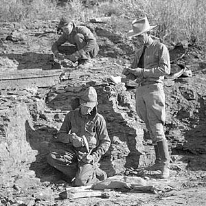 People working in fossil quarry