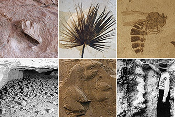 photographs of body and trace fossils from NPS areas
