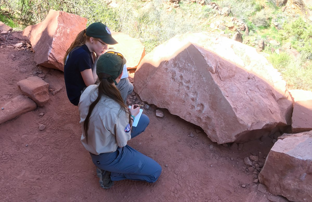 two people examine fossil tracks on trail side boulder