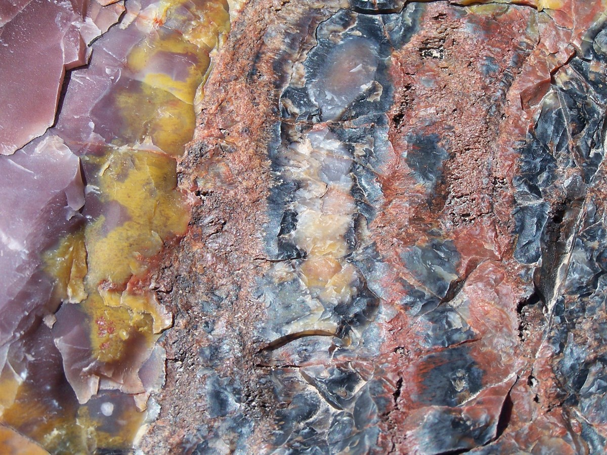 colorful minerals in fossilized wood