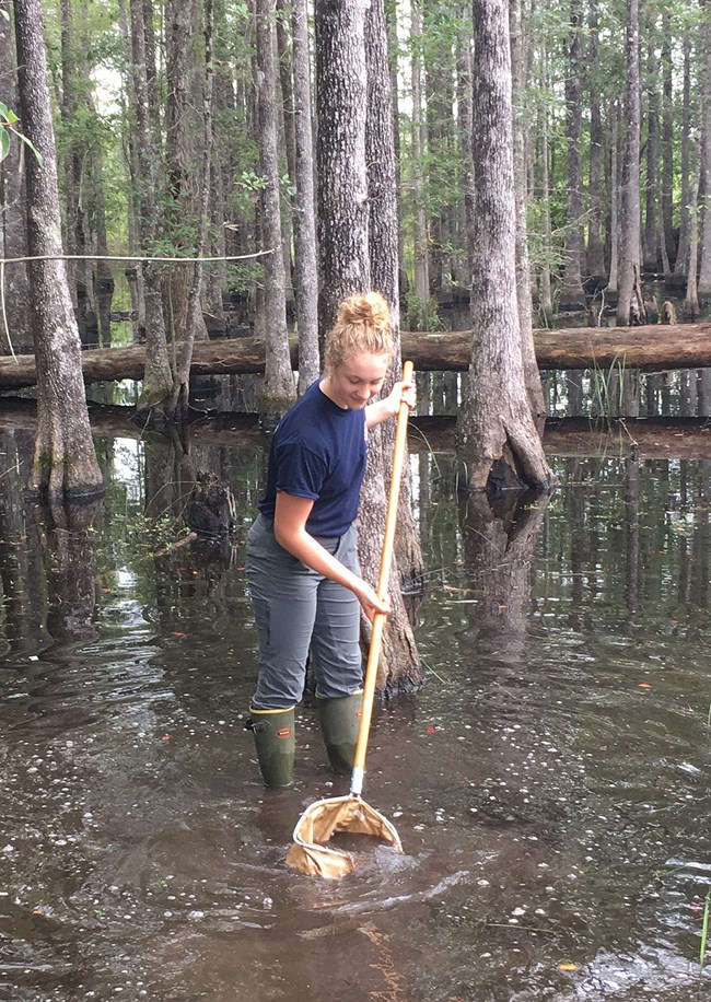 scientist in swamp collecting sediment sample with a dip pole