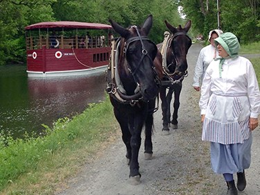 Two brown mules pull a school group on a red canal boat along the Lehigh Canal at the National Canal Museum