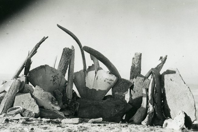 Reconstruction of whalebone hut on San Nicolas Island. Photo taken during Los Angeles Museum Biological Survey 1939–1941. Courtesy of the Los Angeles Museum of Natural History.