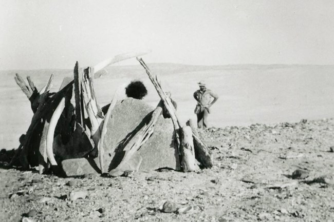 Woman posing in whalebone hut reconstructed from remains of shelter possibly built by the Lone Woman. Photo taken in 1941. Courtesy of Los Angeles County Museum of Natural History.