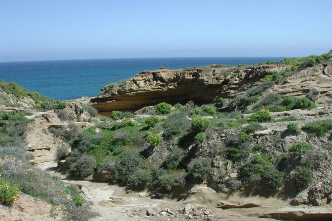 brown canyon walls covered with green shrubs with view of ocean in background