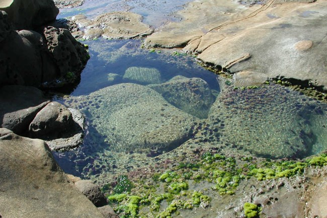 a close view of a clear pool of water among rocks, with green aquatic plants visible
