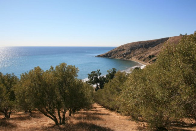 a view of an island cove, looking over a grove of olive trees