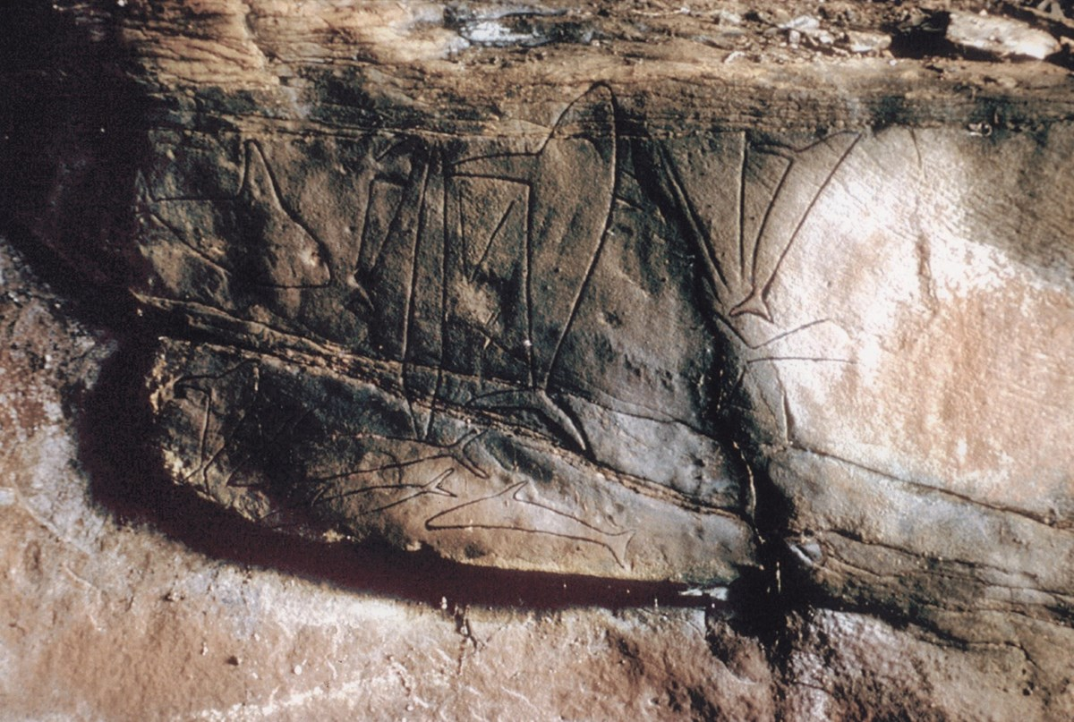 Pictures of Native American Indian petroglyphs in shape of whales.