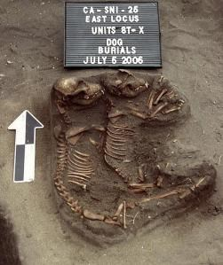 Double dog burial discovered on San Nicolas Island. Courtesy of Department of Anthropology, California State University, Los Angeles