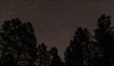 Silhouetted trees frame this starry night sky view
