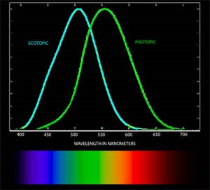 Scotopic and Photopic light wavelengths, two visual functions of the human eye, are plotted here in nanometers, showing sensitivity by the color of light received.