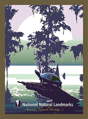 Graphic drawing of turtle basking in cypress swamp