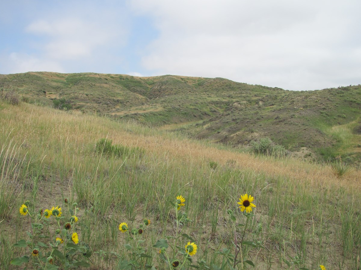 Scenic view and sunflowers at West Bijou NNL.
