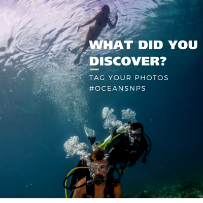 Snorkeler and divers at Dry Tortugas National Park. Text over photo: What did you discover? Tag your photos #oceansnps