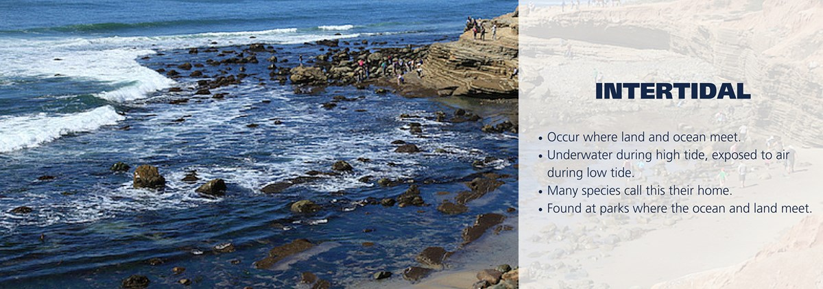 Rocky intertidal with people on rocks. Text over image reading: Occur where land and ocean meet.  Underwater during high tide, exposed to air during low tide.  Many species call this their home. Found at parks where the ocean and land meet.