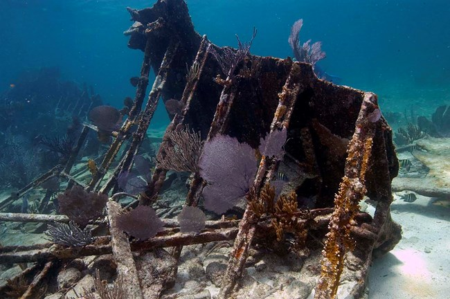 shipwreck underwater with corals growing on it