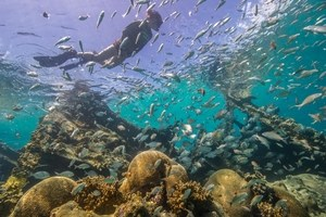 snorkeler swimming among a school of fish