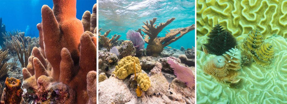 a triptych of 3 different types of coral