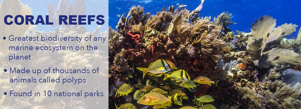 coral with 3 facts about polyps, biodiversity, and 10 national parks with coral