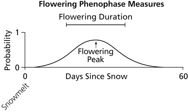 Line curve showing probability of flowering duration and peak timing relative to days since snow melt. Peak flowering is about 27 days after snow melt. Probability that peak flowering occurs between around 15 and 39 days after snow melt is >30%.