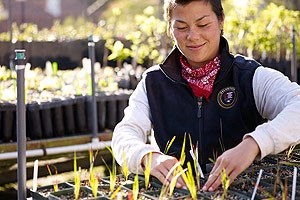 Volunteer helping at the Golden Gate NRA nursery.