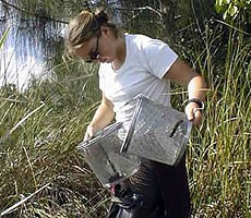 A volunteer in Everglades National Park identifying aquatic species in a sawgrass prairie.
