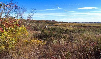 An autumn salt marsh scene at Jamaica Bay Wildlife Refuge.