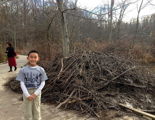 boy stands on boardwalk next to beaver lodge built partly on the boardwalk