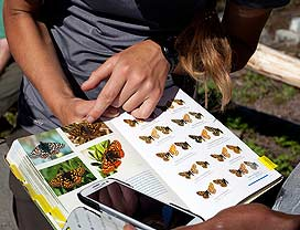 A field guide helps a visitor identify butterflies.
