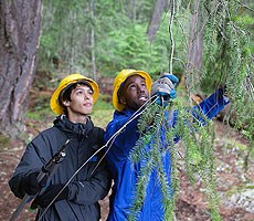 Two boys remove tree branches while clearing a park trail in North Cascades National Park
