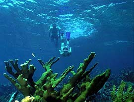 Snorkelers swim toward a reef in Biscayne National Park
