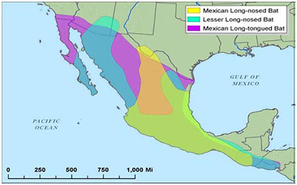 Night Flyers Desert Pollinator Bats Pollinators US National - Map of the us deserts