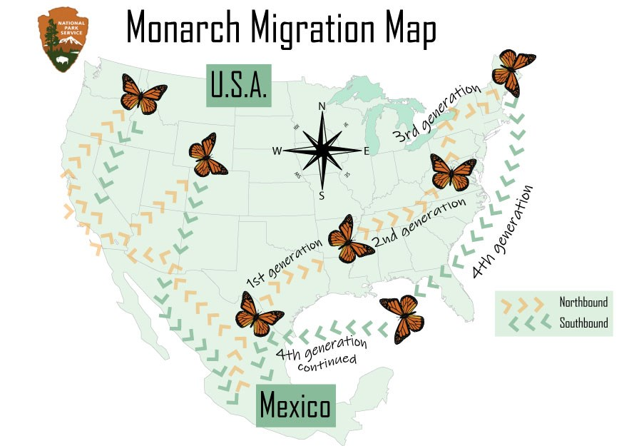 Map of the US showing the journey of monarchs from the southern US, to the northern, and back to Mexico in the south