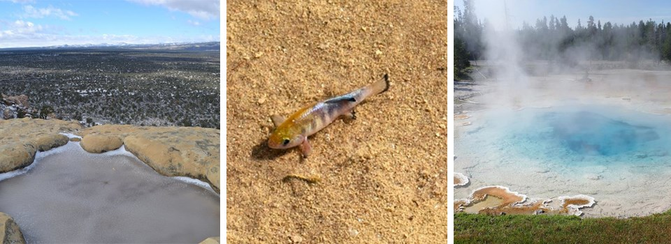 Series of pictures: 1. Small pool of water in a sandstone rock, 2. A small brown fish on the bottom of a sand bed, 3. A blue toned hot spring steaming.