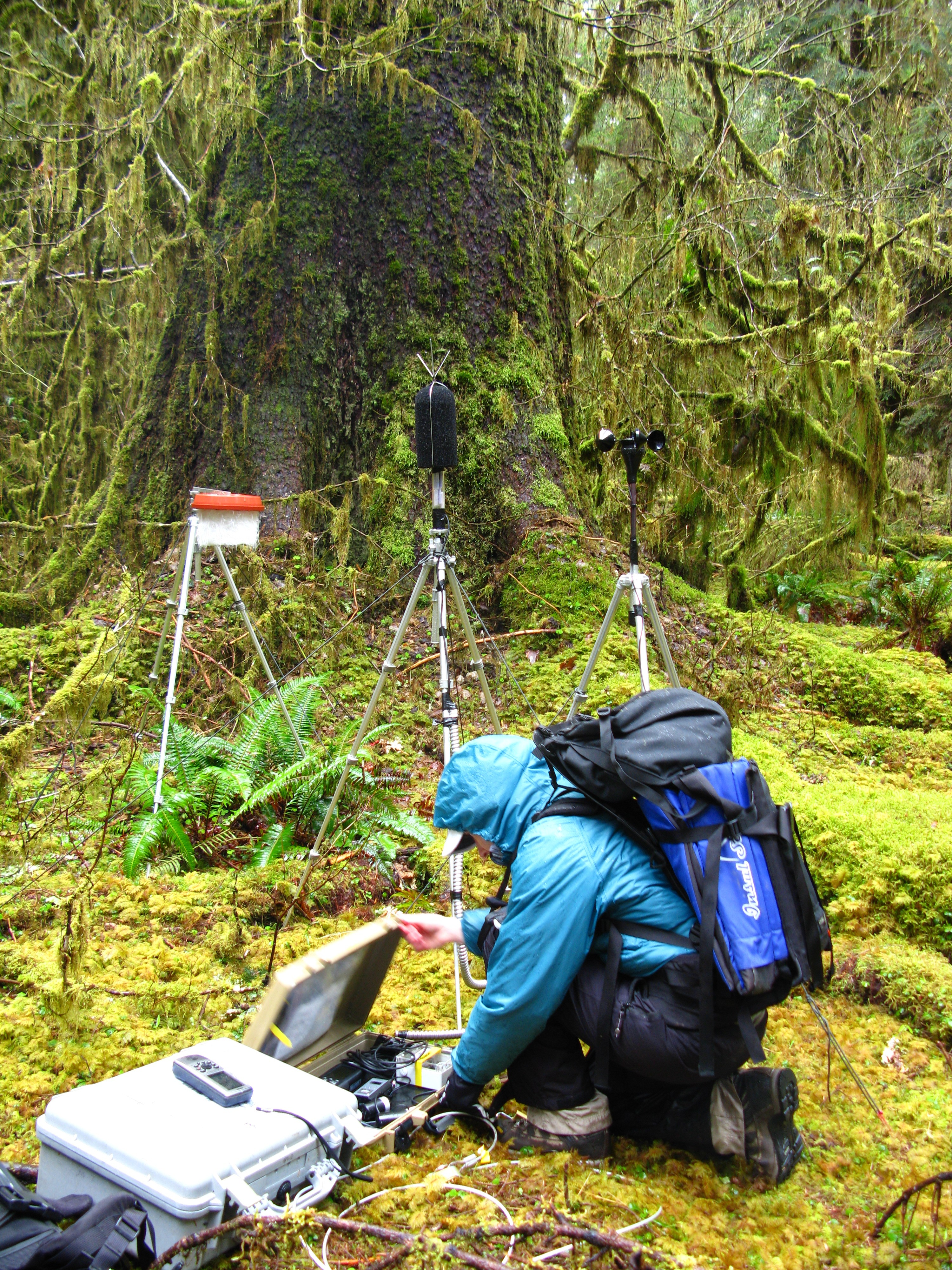 Field technician gathers sounds at Olympic National Park