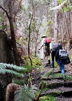Hikers climb the Halemau'u trail, Hawai'i Volcanoes National Park.