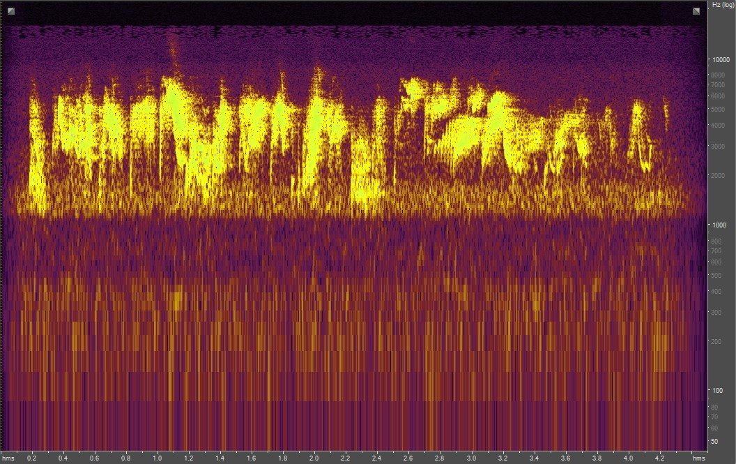Spectrogram of an alder flycatcher