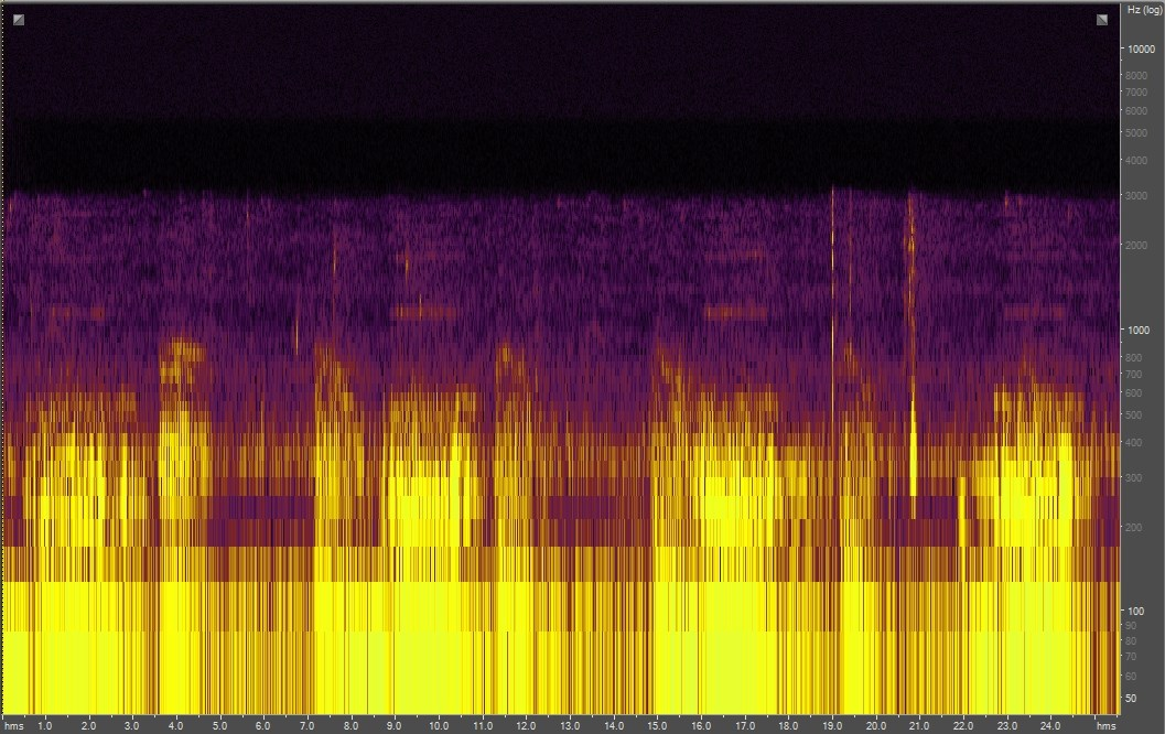 Spectrogram of alligator audio recording