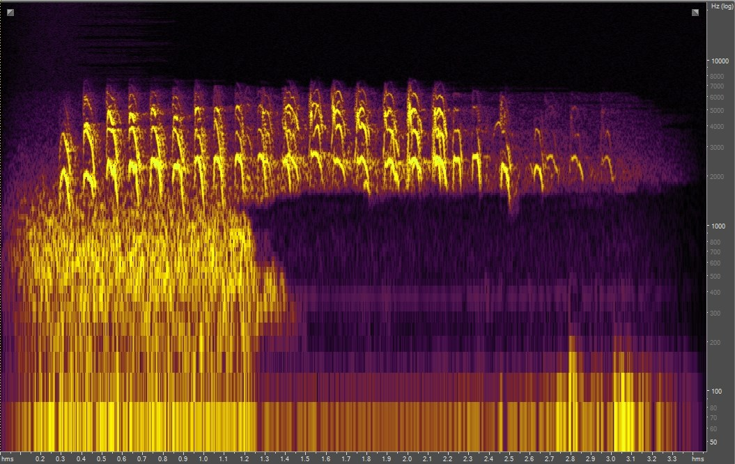 Spectrogram of an American Robin