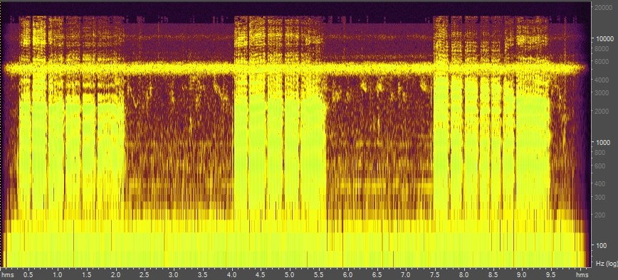Spectrogram of anhinga, Everglades National Park, Florida