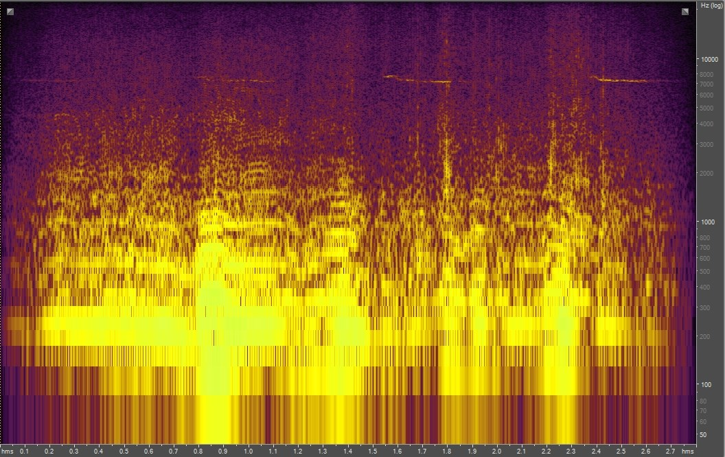 Spectrogram of a bee