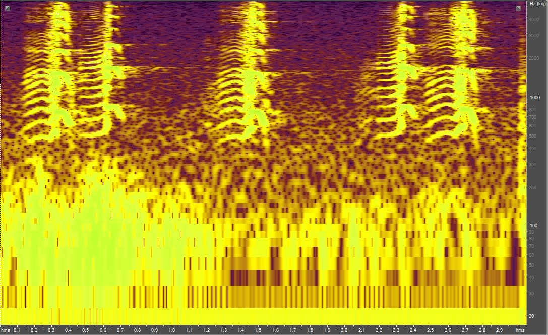 Spectrogram of Canada geese