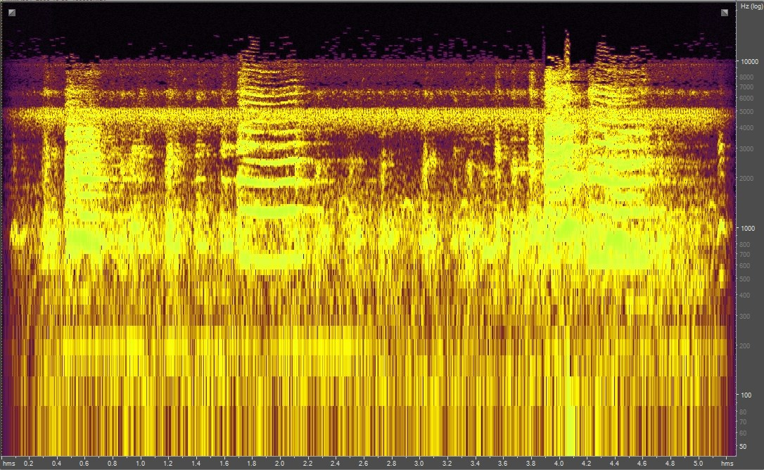 Spectrogram of chickens